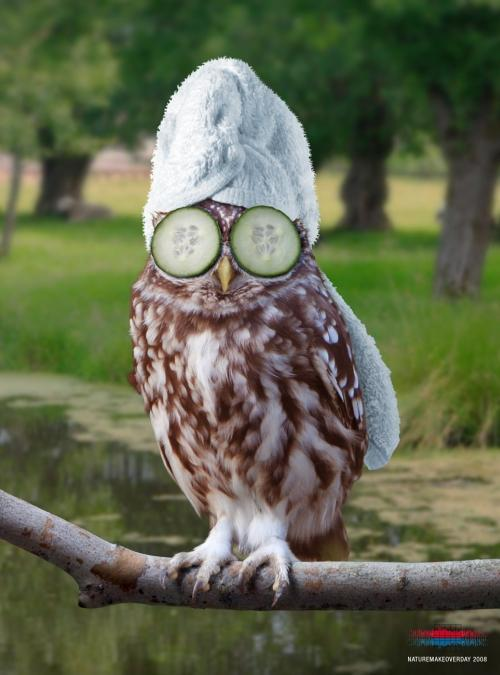 owl-cucumber-towl-beauty-mask